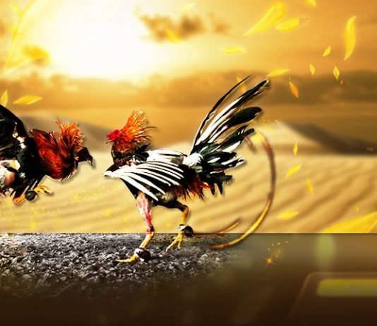 เรียนรู้การเลี้ยงไก่ การปล่อยไก่เดินช่วยให้ไก่ขยายตัวแข็งแรง